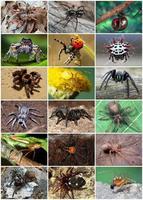 Seis lugares en los que puedes tropezarte con arañas terroríficamente venenosas