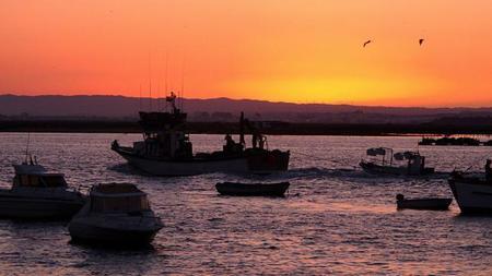 Buscando la gamba blanca por la provincia de Huelva