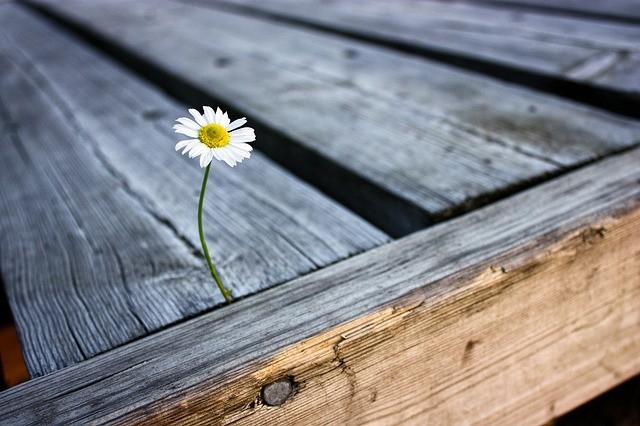 Flor que nace entre listones de madera.