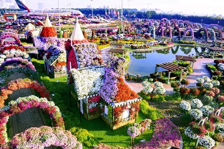 Dubai Miracle Garden 3