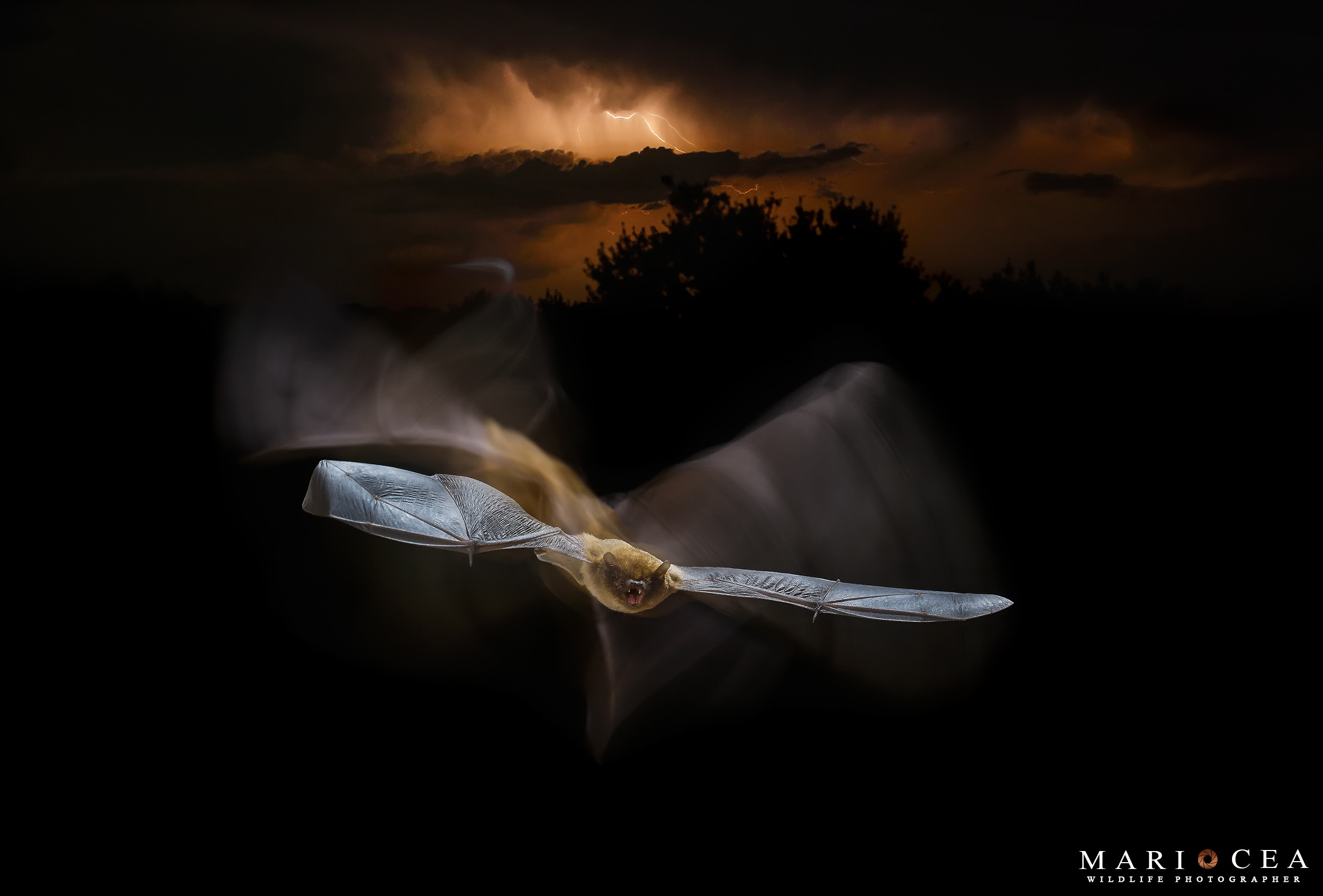 Foto de Fotografías de naturaleza tomadas por Mario Cea (6/12)