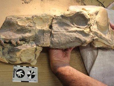 Esto es lo que había en un dinosaurio de hace 180 millones de años