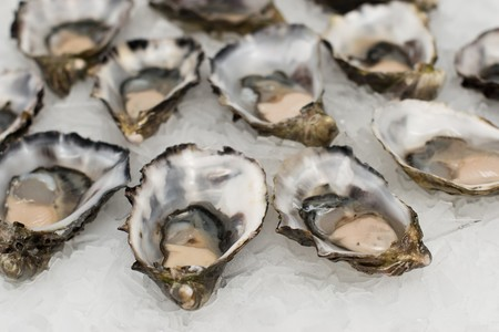 Oysters 2220607 1280