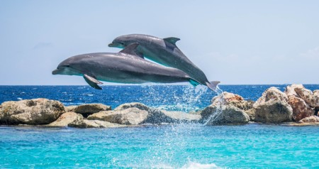Dolphins 906175 1280