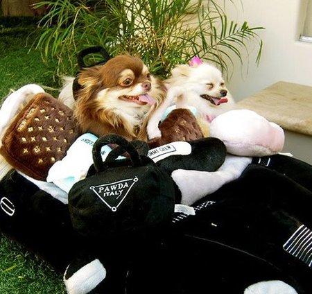 Adivina de quién... son estos adorables perritos
