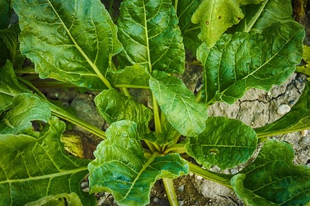 Spinach 3711975 1280