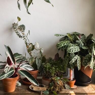 3 soluciones para que tus plantas sobrevivan a las vacaciones