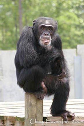 Chimp Heaven y otras curiosas residencias donde los animales viven como reyes