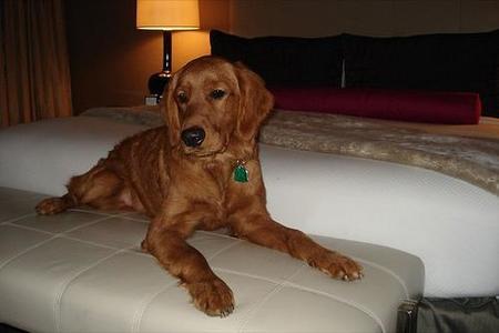 El lujo para las mascotas llegó a algunos hoteles españoles