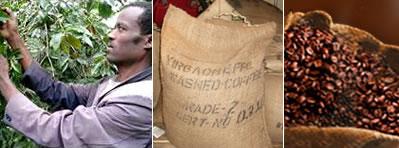 Preacuerdo para reconocer la denominación de origen del café etíope