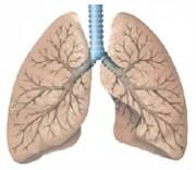 Se crea en Catalunya el Laboratorio Internacional en Epidemiología Respiratoria (ILRE)