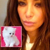 Me pareció ver un lindo gatito... la nueva mascota de Kim Kardashian