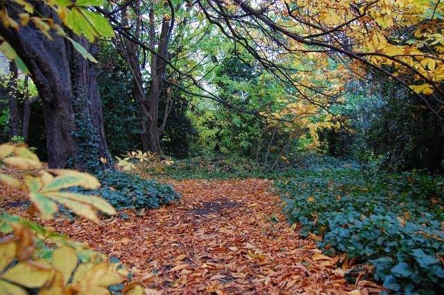 Camino de hojas