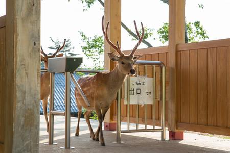 Planet Deer Yoko Ishii 4