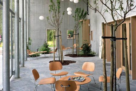 Árboles dentro de una vivienda