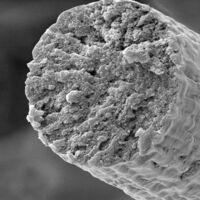 Músculos más duros que el Kevlar: crean a partir de microbios fibra muscular ultrarresistente y biocompatible