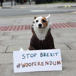 Los británicos están descubriendo quién puede ser uno de los más perjudicados por el Brexit: sus mascotas