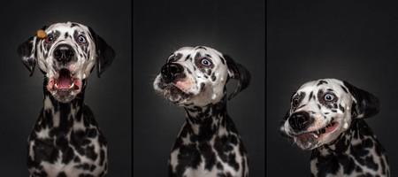 'Dogs Catching Treats', las fotos de perros más divertidas que hayas visto las hace el fotógrafo Christian Vieler