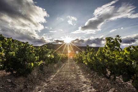 No cosechar, almacenar o fabricar gel hidroalcohólico: las soluciones para la crisis del vino en una España sin bares ni turismo