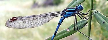 El sistema visual de estos insectos es más rápido que el de cualquier vertebrado estudiado hasta ahora