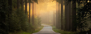 La magia y el misterio en las evocadoras fotografías de bosques de Martin Podt