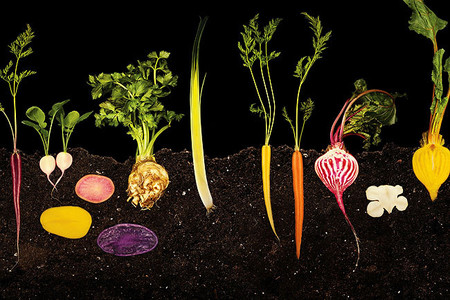 Las fotografías de Ryan Matthew Smith para Modernist Cuisine combinan arte, ciencia y cocina