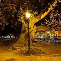 Foto 11 de 16 de la galería fotos-tomadas-con-el-pixel-2-xl en Xataka