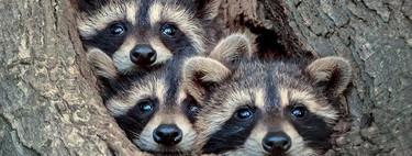 Los tiernos retratos de animales salvajes de Kevin Biskaborn