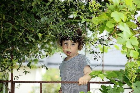 Vendimia infantil en La Rioja