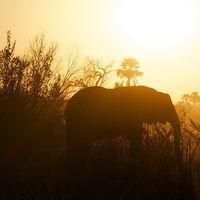 Los humanos sólo somos el 0,01% de la vida del planeta y hemos aniquilado al 83% de los mamíferos