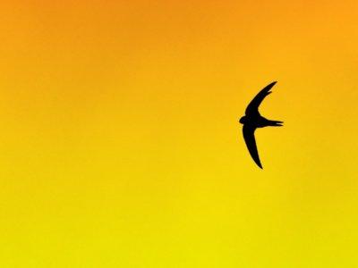 21 cursos online para aprender Swift este verano