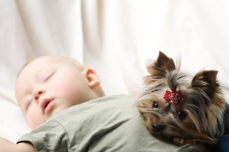 Los bebés que conviven con perros tienen menos riesgo de desarrollar asma