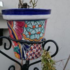 Foto 9 de 22 de la galería fotografias-con-el-sony-xperia-z3 en Xataka México