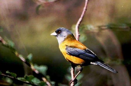 El canto de un pájaro VERSUS el ruido de la ciudad