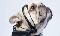 ¿No entiendes a tu mascota? Aquí te traemos un traductor de ladridos, ¡justo lo que necesitas!