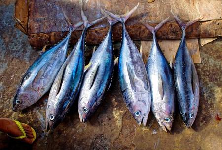 Cómo congelar correctamente pescados y mariscos