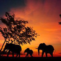 Este vídeo con dron sobre África te dará ganas de dejarlo todo y comprarte un billete