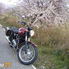 Foto 14 de 28 de la galería prueba-triumph-bonneville en Motorpasion Moto