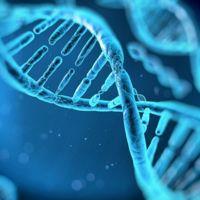 Se descubre que el ADN puede emitir un brillo fluorescente (pero no todo el tiempo)
