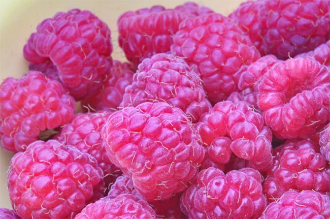 Cómo congelar la fruta fresca