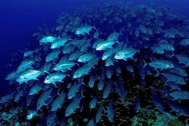 Banco de peces | xataka