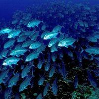 El ruido humano amenaza a los bancos de peces
