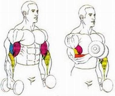 Consigue En Pocos Meses Unos Bíceps Más Fuertes