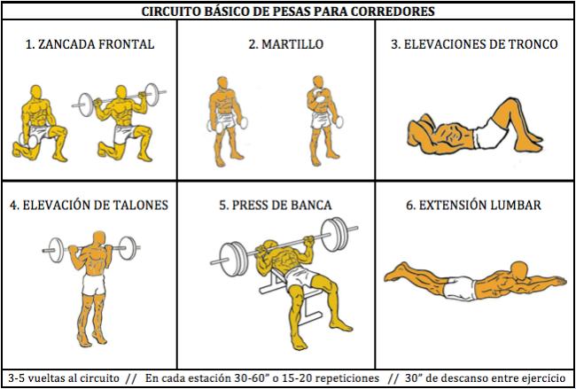 Musculación para corredores (VIII): circuito básico