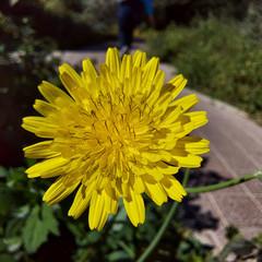 Foto 65 de 68 de la galería fotos-tomadas-con-el-samsung-galaxy-s10-lite en Xataka Android
