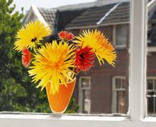 Flores para tu ventana