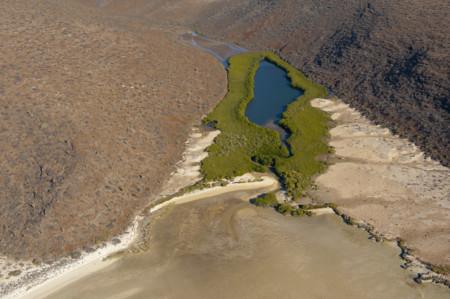 Los manglares del desierto de México: los héroes anónimos contra el cambio climático
