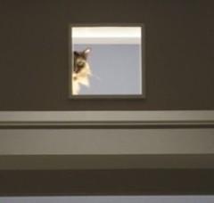 Foto 3 de 3 de la galería una-pasarela-para-tus-gatos en Decoesfera