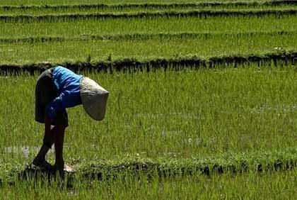 Tus fotos de viaje: campos de arroz en Vietnam