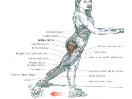musculo-gluteo